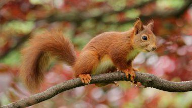 Veverky - život ve větvích